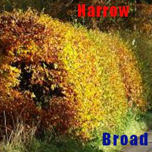 image of shaped hedge
