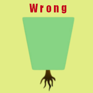 wrong hedge shape